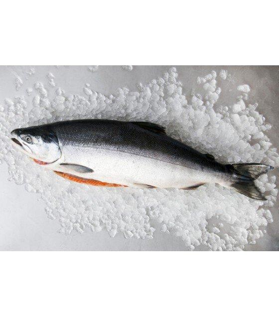 Wild Sockeye (Red) Salmon Whole Fish - approx. 1,8 kg (frozen) /  急凍俄羅斯野生紅肉鮭魚 、條裝 約1,8 kg